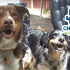 52% Off at Cha Cha's Doggie Daycare