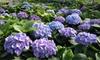 San Gabriel Nursery & Florist  - San Gabriel: $10 for $20 Worth of Plants and Flowers at San Gabriel Nursery & Florist