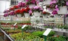Black Diamond Garden Center - Multiple Locations: $15 for $30 Worth of Annuals, Perennials, Trees, and Shrubs at Black Diamond, Inc.