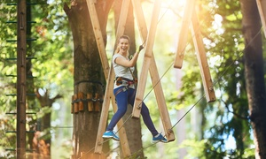Arbre en arbre Havelock: Treetop Aerial Course for One, Two or Four at Arbre en arbre Havelock (Up to 56% Off)