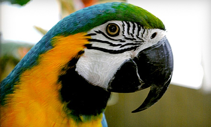 Bird Kingdom Toronto - Niagara Falls: Aviary Visit for a Child, Senior, or Adult to Bird Kingdom in Niagara Falls (Up to 53% Off)