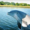 54% Off Dolphin -Watching Tour or History Cruise