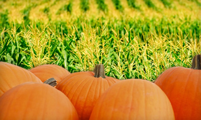 Mitcham Farm - Colonel Cob's Corn Maze & Pumpkin Patch at Mitcham Farm: Admission for Two or Four to Corn Maze, Hayride, and Pumpkin Patch at Mitcham Farm in Oxford