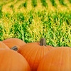 Up to 55% Off Corn Maze and Activities in Oxford