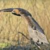 Half Off Birds of Prey Conservation-Centre Visit