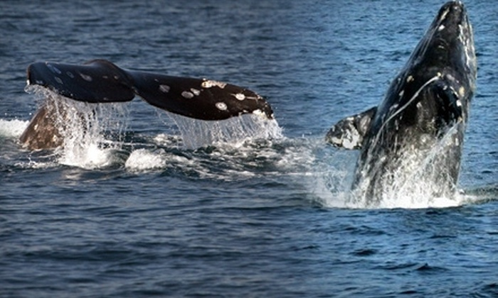 Dana Wharf Sportfishing & Whale Watching - Dana Point: $14 for One Ticket for Whale-Watching Cruise from Dana Wharf Sportfishing & Whale Watching (Up to $29 Value)
