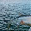 Half Off Fishing Trip from Jupiter Fly Fishing
