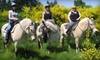 Morris's Shadow Mountain Stables - Lea Hill: $30 for One 90-Minute Trail Ride ($65 Value) or $6 for One Petting Farm Pass ($12 Value) at Morris's Stables in Auburn