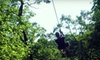 Eco Zipline Tours - New Florence: $40 for a High Flyer Tour at Eco Zipline Tours in New Florence ($82.50 Value)