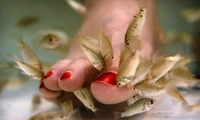 All About the Sole - Farmington: $29 for a 15-Minute Dr. Fish Therapy Treatment and Classic Pedicure at All About the Sole in Hampton ($60 Value)
