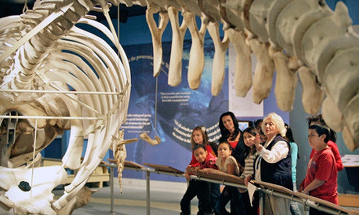 New Bedford Whaling Museum - Westview Park: Family or Associate Membership to New Bedford Whaling Museum (54% Off)