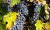Raftshol Vineyards Inc - Suttons Bay: $10 for $20 Worth of Wine and Mead at Raftshol Vineyards in Suttons Bay