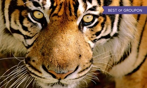 Austin Zoo: Zoo Visit for Two, Four, or Six to Austin Zoo (Up to 48% Off)