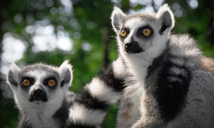 Duke Lemur Center - Durham: Lemurs Live! or Walking with Lemurs Experience at Duke Lemur Center (Up to Half Off)