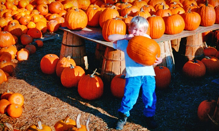 The Pumpkin Patch - Caledonia: Tickets to Pumpkin-Patch Attractions