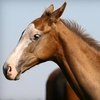 72% Off Horseback-Riding Lessons