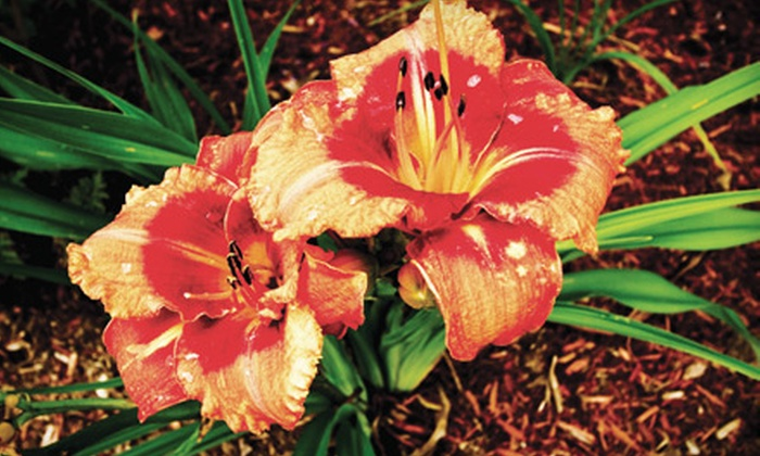Courtland Professional Property Management  - Tillsonburg: Plants and Garden Supplies or Landscape Design Consultation at Courtland Professional Property Management