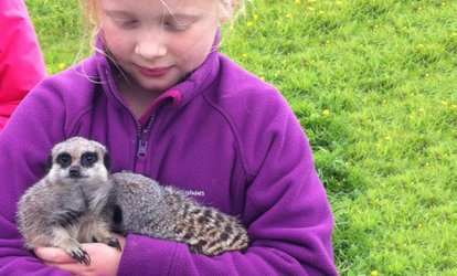 image for Hands-On Animal Experience with Meerkats and Bearded Dragon Lizards for Up to Four at Beaver Hall Equestrian Centre