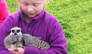 Beaver Hall Equestrian Centre: Hands-On Animal Experience with Meerkats and Bearded Dragon Lizards for Up to Four at Beaver Hall Equestrian Centre