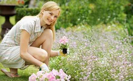 $50 Groupon to Holly, Woods and Vines - Holly, Woods and Vines in Alexandria
