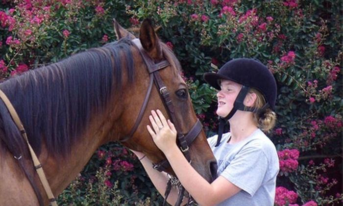 Cherokee Hill Farm - Tryon: Horseback-Riding Lesson at Cherokee Hill Farm in Tryon. Two Options Available.