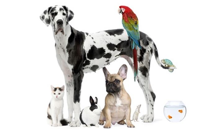 Linda's Pet Sitting, LLC - Haines Lake Estates: $9 for $17 Worth of Pet Care at Linda's Pet Sitting, LLC