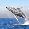 Up to 50% Off Whale Watching