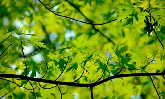 Branch Tree Service, Inc. - Warren: Branch Tree Service, Inc.