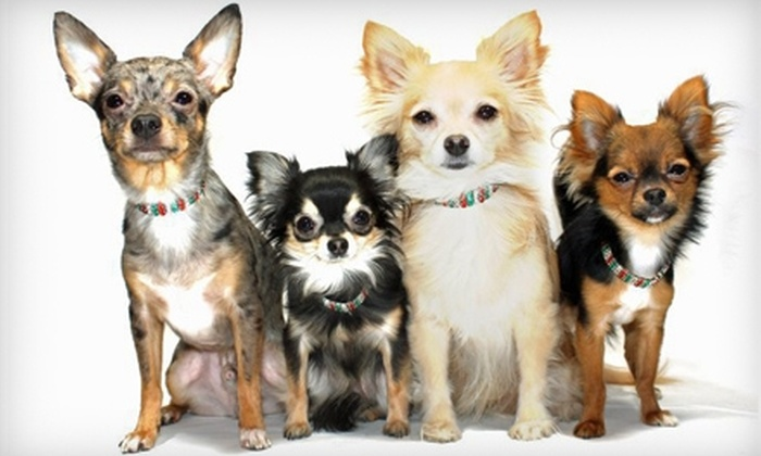 Super Pet Expo - Chantilly: $10 for a Weekend Pass to the Super Pet Expo at Dulles Expo Center in Chantilly ($20 Value)