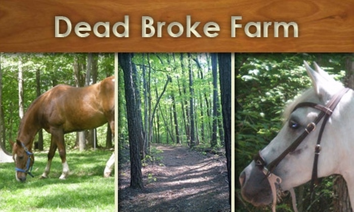 Dead Broke Farm - Raleigh / Durham: $25 for a Trail Ride at Dead Broke Farm ($50 Value)