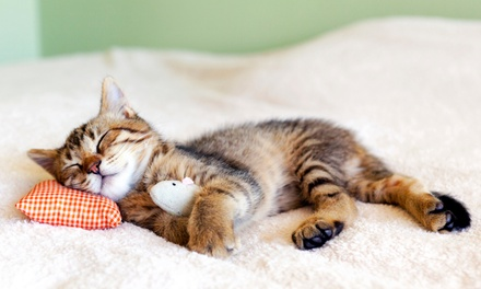 $30 for a New-Pet Exam with Rabies or Bordetella Vaccine at Imperial Beach Pet Hospital ($63 Value)