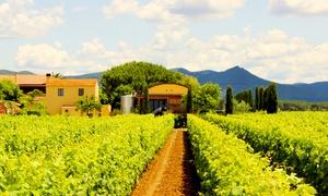 Fattoria Terre del Marchesato Bolgheri: Degustazione 6 calici di vino a Bolgheri, con visita ai vigneti e cantina da Terre del Marchesato (sconto fino a 65%)