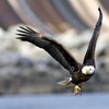 Up to 71% Off Eagle Tour
