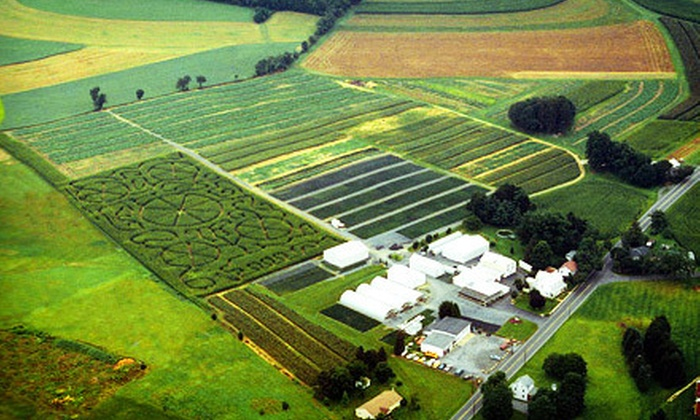 Grim's Greenhouse & Farm Market - BREINIGSVILLE: Corn Maze for Two or Four with Optional Hayrides and Play Corral at Grim's Greenhouse & Farm Market (Up to 53% Off)