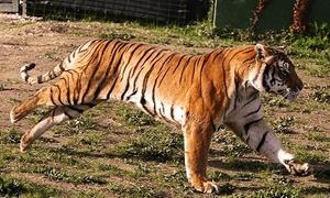Safari Ravenna: Zoo Safari Ravenna: biglietti ingresso per una persona valido da lunedì a sabato (sconto 20%)