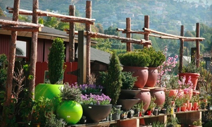Laguna Nursery - Laguna Nursery: $25 for $50 Worth of Plants and Landscaping Supplies at Laguna Nursery in Laguna Beach