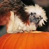 Up to $20 Off Halloween Events at Stone Zoo or Franklin Park Zoo