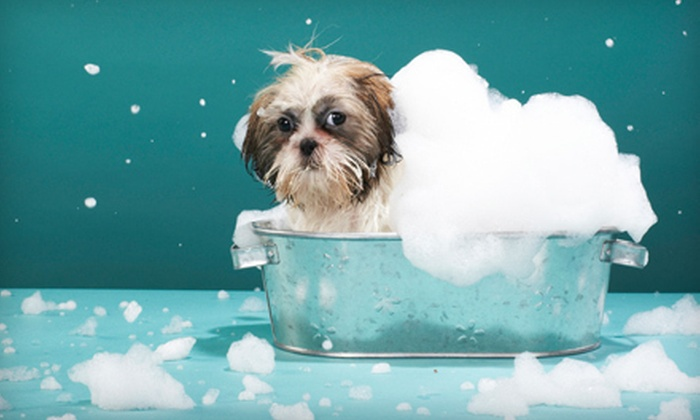 Tidy Dogs Grooming Spa - Thunderbolt: Full Grooming Package for a Small, Medium, or Large Dog at Tidy Dogs Grooming Spa in Thunderbolt (Up to 55% Off)