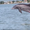 52% Off Wildlife Cruise for Two in Madeira Beach