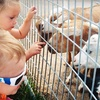 $12 for Two General-Admission Tickets to Green Meadows Petting Farm ($24 Value)