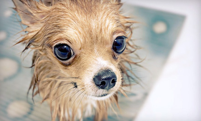 Jake's Dog House - Multiple Locations: Dog-Spa Package, Grooming Package, or Pet Supplies in Store or Online from Jake's Dog House