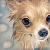 79% Off Dog Grooming or Pet Supplies
