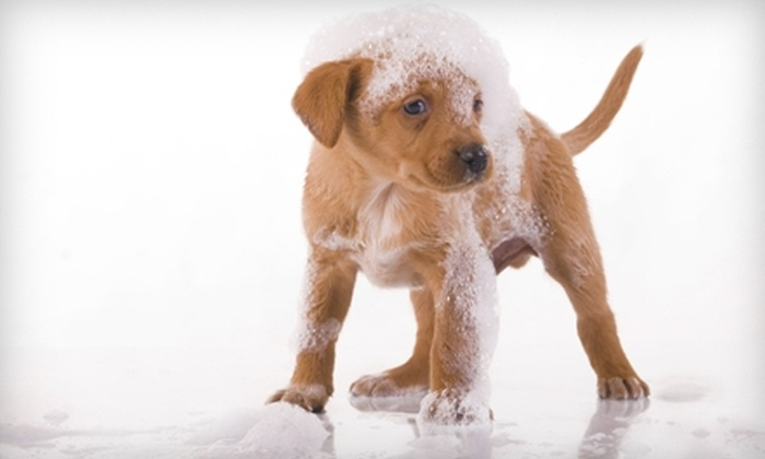 So Fresh Grooming - Hospital Hill: $45 for Two Door-to-Door Dog Washes at So Fresh Grooming (Up to $90 Value)