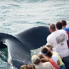 41% Off Whale Watching Tour for Two in Plymouth