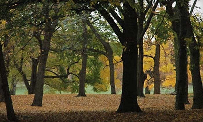 Prospect Park Alliance: $37 for a Commemorative Tree Planting in Prospect Park Through the Prospect Park Alliance in Brooklyn ($75 Value)