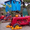 Up to Half Off Fall Farm Activity Package