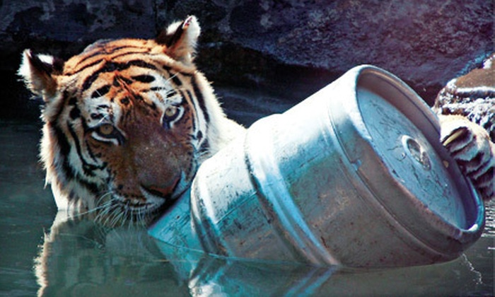 Blank Park Zoo - Des Moines: After-Hours Zoo Brew Outing for 2, 6, or 10 at Blank Park Zoo (Up to 64% Off)