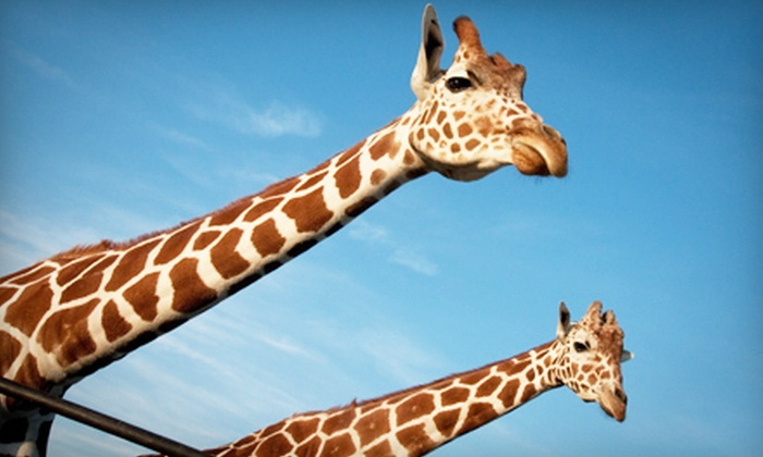 African Safari Wildlife Park‎ - Port Clinton: African Safari Wildlife Park Visit on Weekday or Any Day (Up to 64% Off)