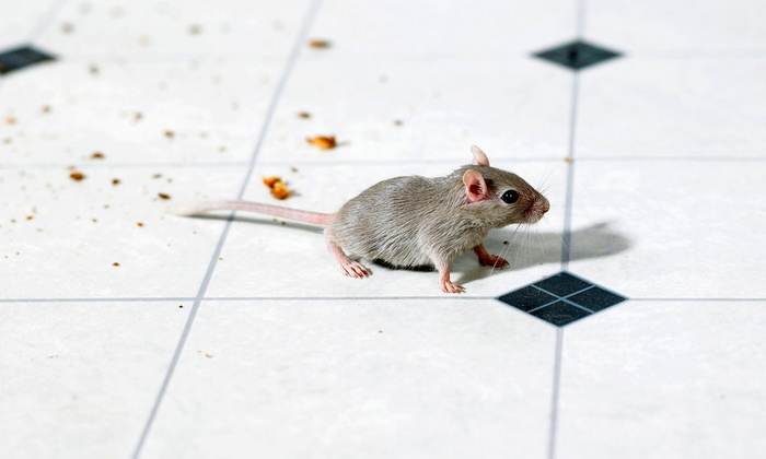 ALLCRITTER - Atlanta: $28 for a Rodent-Inspection Service from AllCritter ($50 Value)
