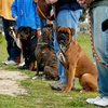 50% Off Dog Boarding, Daycare, or Training